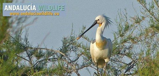 Andalucia Wildlife