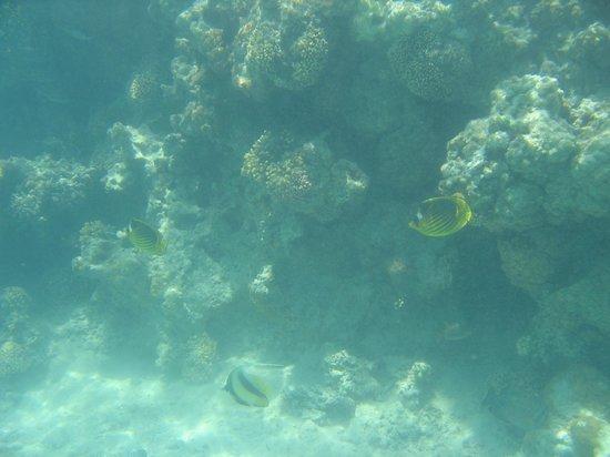 Aquarius Diving Club: Red sea snorkeling