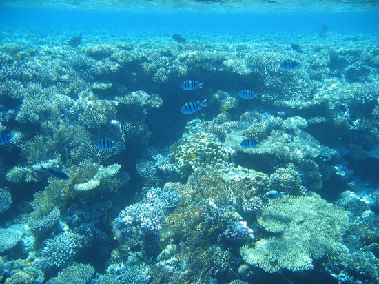 Aquarius Diving Club: Red sea snorkeling