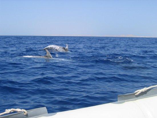 Aquarius Diving Club : Dolphins