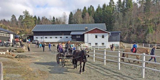 Damgarden Riding Centre: Ponniridning og kjøring med hest