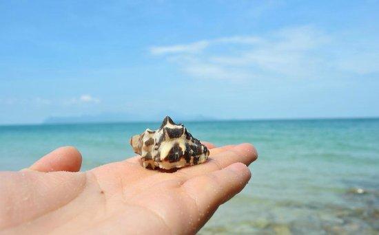 Tengah Beach: I brought it home