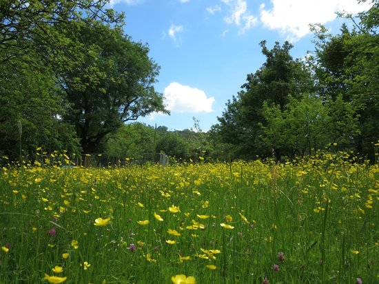 Homelands Bed and Breakfast: Wildflower meadow at rear of property