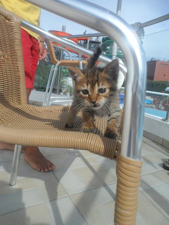 Electra Holiday Village: Wee Kitten in the waterpark