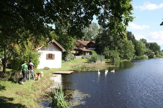 Degerndorf, Germany: Wasser und Natur nur wenige Schritte vom Haus entfernt