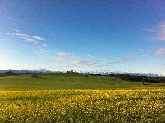 Degerndorf, Germany: Grüne Wiesen, blauer Himmel, herrlich!