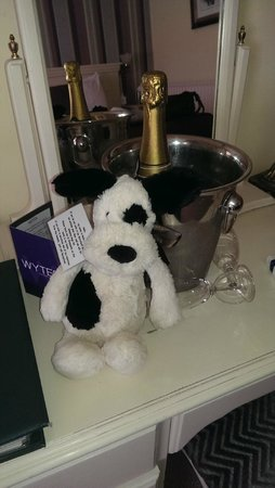 Stanwell House Hotel: Roly the ..Do not Disturb dog..