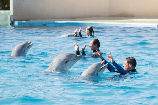 Aquopolis: Exhibición de Delfines