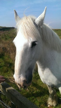 Scotchcoulthard Self-Catering Holiday Cottages: Horsey!! :)