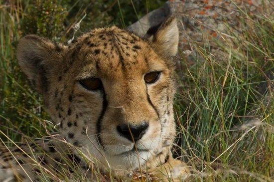 Samara Private Game Reserve: Sibella an old lady now at 16