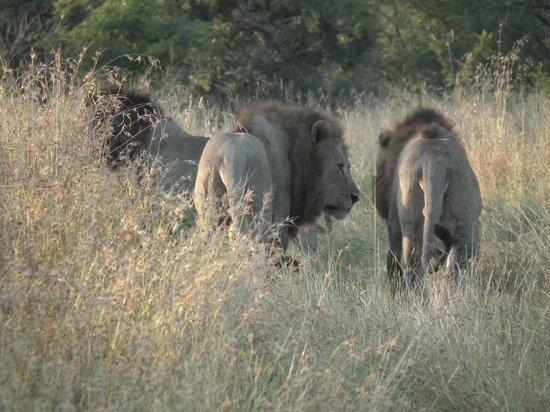 Zebra Hills Safari Lodge: The three boys