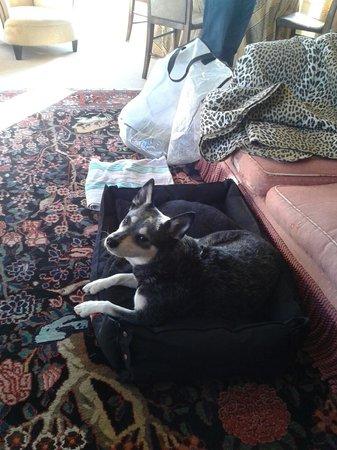 Hambledon House: Happy dog guest