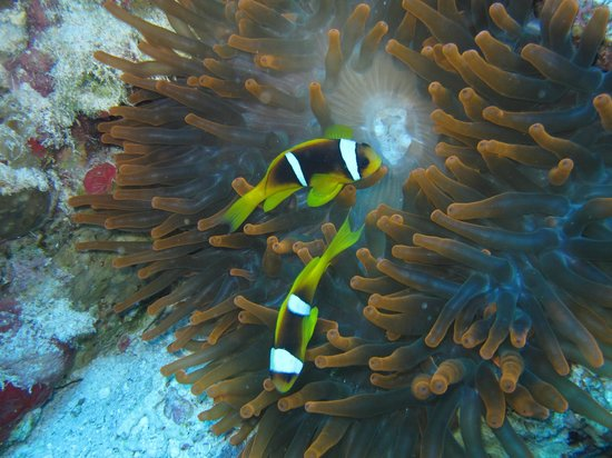 Sinai Dive Club: From the house reef in Naama Bay