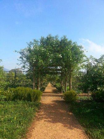 Babylonstoren Garden: Beautiful landscaping