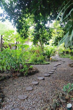 Wild Orchid : landscaping around