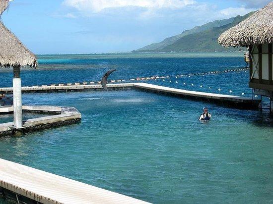 InterContinental Tahiti Resort & Spa: Galina