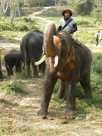 Patara Elephant Farm - Private Tours : Pachyderm greeting