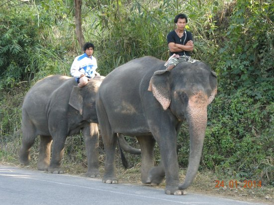 Patara Elephant Farm - Private Tours : Road walking