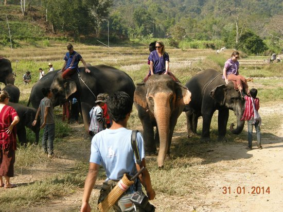 Patara Elephant Farm - Private Tours : Ride your elephant
