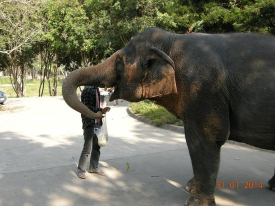 Patara Elephant Farm - Private Tours : Hand feeding