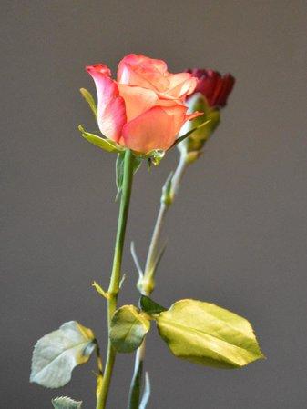 Plough & Harrow: Flowers on the tables