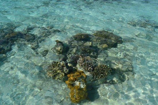 Kurumba Maldives: рифы