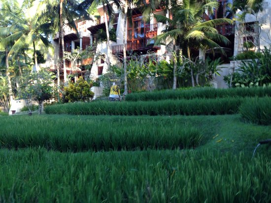 Four Seasons Resort Bali at Sayan : A glimpse from the buggy..