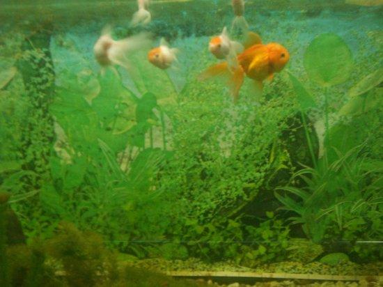 Arignar Anna Zoological Park : Aquarium