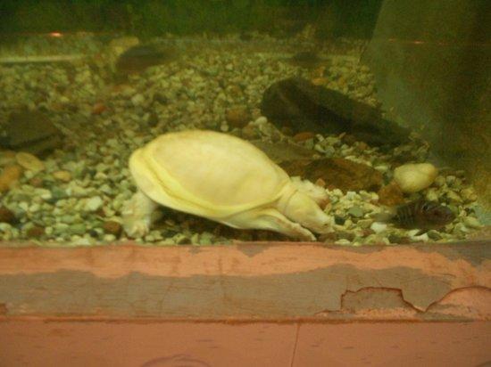 Arignar Anna Zoological Park : Turtles on aquarium