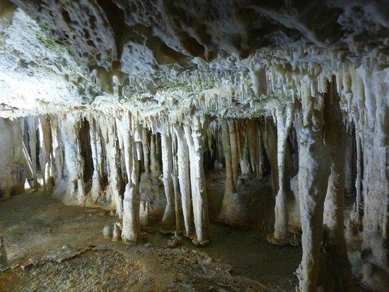 Coves de Campanet: Aperçu de la grotte