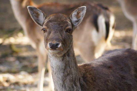 Wildpark Poing: Zum Greifen nah