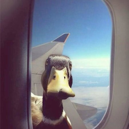 Voyage Torba: In the plain back home a duck came along...