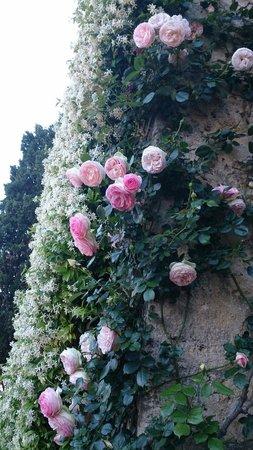 Torre Sangiovanni Albergo e Ristorante : Fiori splendidi