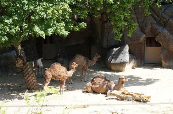 Antwerp Zoo (Dierentuin) : Zoo