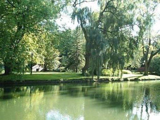 CityCat Ferry : river greenery