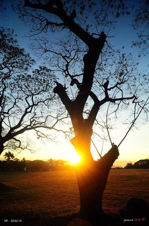 University of the Philippines: Sunset behind the trees