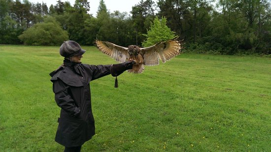 A Grand Day out at Strathblane Falconry