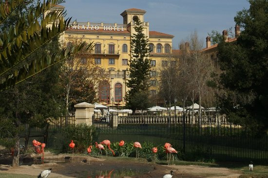 Montecasino : View from the aviary
