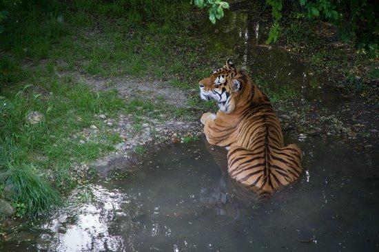 Oaza Sibirskeho Tigra
