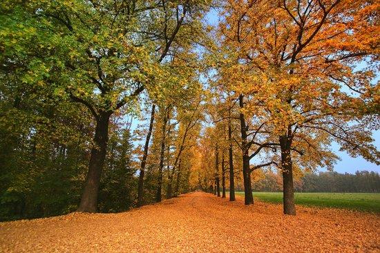 Monza, Italia: Parco in autunno, una spettacolare combinazione di colori