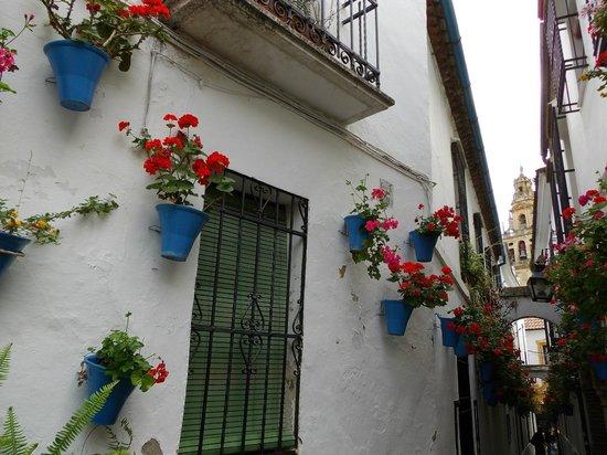 Calleja de las Flores: ここから入ります