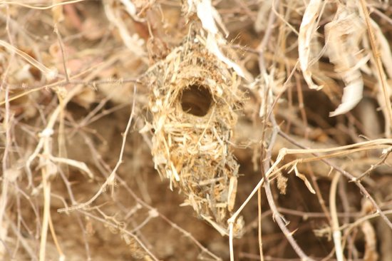 Lion Safari Camp: SUN BIRD NEST