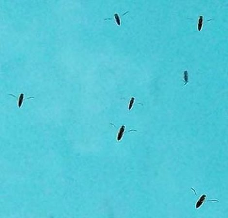 Castaways Resort & Spa Mission Beach : dead insects in outdoor pool area