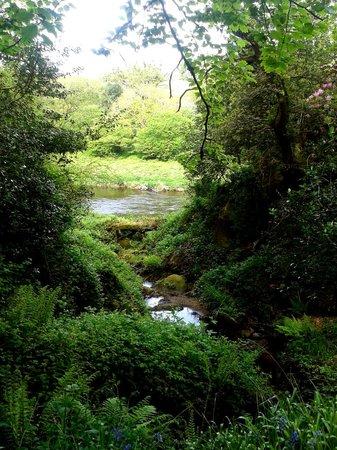 Altamont Gardens: river