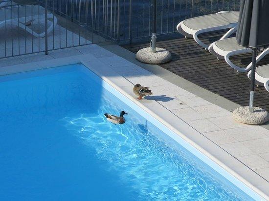 Hotel Rivalago: piscine avec les canards