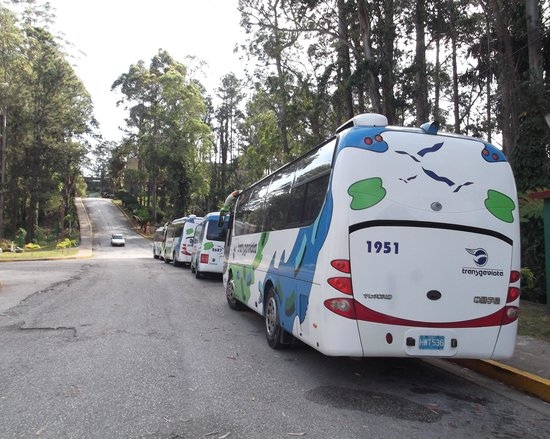 Hotel Los Helechos : Tours buses nearby.