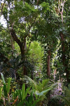 Coco Grove Beach Resort : Felt like walking in botanical garden