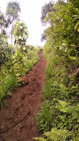 Hanakapi`ai Trail: Trail can be steep and very muddy when raining.