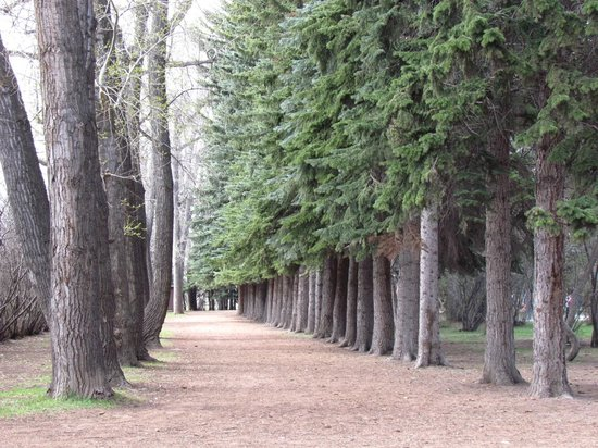 Edworthy Park & Douglas Fir Trail: ต้นสนใหญ่ร่มรื่น