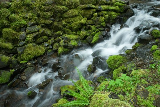 Sol Duc Hot Springs Resort: In rainforest
